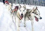 Drive Your Own Dog Team - 2 Hour Dog Sledding Tour