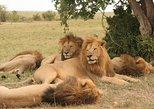 3-Day Masai Mara Express - Budget Safari