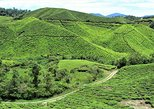 Breezy Cameron Highlands Nature Tour from Kuala Lumpur