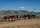3d, 2n Tour to Terelj National Park, Elsen Tasarkhai Sand Dunes