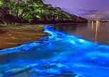 Luminous Lagoon (Glistening Waters) and Rose Hall Great House Night Tour