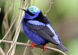 Bird watching ecofriendly tour from Cancun & Riviera Maya