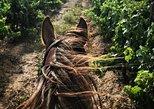 2 Hour Vineyard Trailride