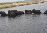 1 Day 1 Night Camping Safari in Chobe National Park