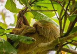 Central America - Costa Rica: Sloth Watching Tour Experience Costa Rica