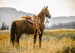 Horseback Ride through the Absaroka-Beartooth Wilderness - 2 Hour Ride