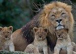 21 days Road trip from Namibia to Kenya,Beach holiday and Kenya safari