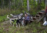Intimate visit of an Alaskan off-grid Homestead with Sled Dogs