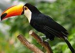 South America - Brazil: Natural Gems of Rio