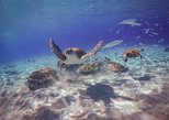 All Inclusive Private Tour Snorkeling with Turtles including Restaurant Lunch
