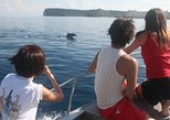 Dolphin Watching and Snorkeling Tour with Guam Spinner Dolphin eBook