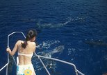 Dolphin Watching, Snorkeling, Scuba Diving, Sup Lesson Package w/ Dolphin eBook!