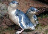Akaroa Shuttle & Penguin Experience