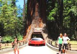 Avenue of the giant redwoods private day trip from San Francisco