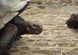7 Day Galapagos Island Hopping Budget