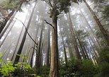 Eco Hiking Tours near Victoria BC