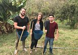Be a farmer for one day (Coffee farm experience)