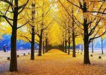 Full Day Customizable Private Nami Island Tour with Photographer tour guide