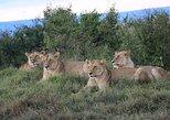 2 Days Masai Mara Nairobi Park Safari