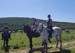 Wicklow monutains horse trekking