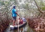 Cartagena Mangrove Tour with Lunch