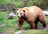 Alaska Beer, Fortress of the Bear, and Totem Park Tour