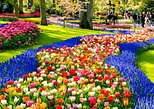 Millions of Flowers in Bloom: Keukenhof and Flower Fields