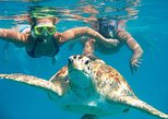 ALL-INCLUSIVE SEA TURTLE SNORKELING EXPERIENCE