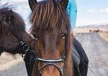 Garún Tour 1. Hour Horse Ride