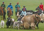 Yak Festival Mongolia,11 days
