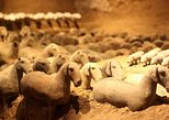 Private Xi'an Tour: Terracotta Warriors, Hanyangling Museum, Cave Homes