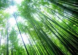 Private tour around Kamakura bamboo Forest and Great Buddha