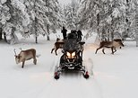 Noon Safari to Wilderness by Electric Snowmobiles