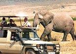 11 Days Best Tanzania Luxury Wildlife Safari