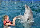 Educational interaction with dolphin in a group of 6 pax. Duration of 30 minutes