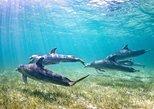 Dolphin Swim in Kona, Hawaii