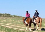 Guided horse trekking rides 1/2/3 hour rides