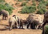Addo Elephant National Park Full Day Safari