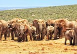 Port Elizabeth Shore Excursion: Full-Day Addo Elephant Park Safari