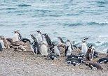 South America - Argentina: Cruise Shore Excursion Ea San Lorenzo Peninsula Valdes - Patagonia - Argentina