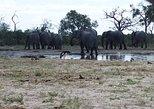 5 days Kasane to Maun Safari (Kasane, Chobe, Khwai, Moremi, Maun)