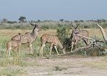 Africa & Mid East - Botswana: Khutse Game Reserve weekend getaway