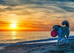 Bring your Dog! Sunset Private Boat Trip in Naples, Florida with Secluded Island Stop