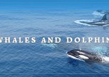 Hualien - Whale and dolphin watching