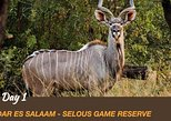 7 Days Safari Selous Reserve & Ruaha National Park