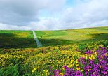 Devon - Dartmoor & pretty local Towns & Villages (1 day trip)