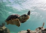 Cayman Turtle Centre and Hell Tour in Grand Cayman