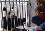 Dujiangyan Wolong Panda Tour option panda keeper experience