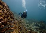 Two Tanks Scuba Diving Tour at Catalina Islands & North Island - CR