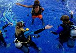 Scuba Diving for Non-Certified Divers at Catalina Islands & North Island - CR